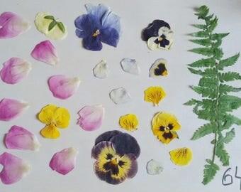floral supplies dry herbs flower petals diy projects pressed leafs/for/craft green fern oak leafs purple petunia fairy kit pressed flower э1