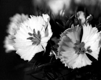 Black & White Flower Series 5 - Aluminum Print