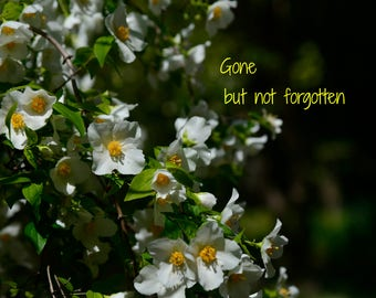 Fine Art photography Grief quotes Mourning photography floral photography white blossoms, gone