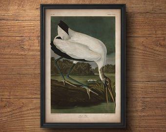 Audubon bird print, Antique bird print, Stork print, Ibis print, Audubon print, Birds of America, John James Audubon, Wall decor, Large art