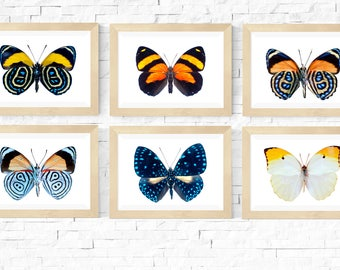 Butterfly SET 6 Colorful Butterflies Print Wall Art Home decor Poster Print Insect Picture Art Print size A4