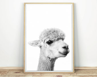 Alpaca Print - Nursery Printable Poster, Alpaca Wall Art, Black And White, Cute Alpaca Poster, Llama Print, Baby Animal Print, Wall Decor