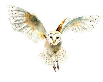 Owl art print , nursery woodland animal , watercolor owl , owl painting , forest animal art print , digital print download