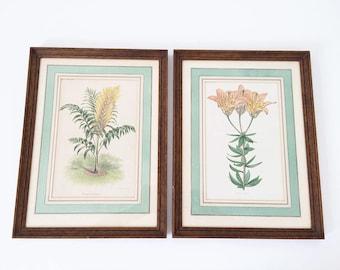 Set of framed botanical / horticultural journal / 1892