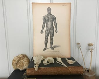 Antique Anatomy Print Anatomy Art Anatomy Human Body Small Poster Print Anatomy Gift for Medical Student Doctor Anatomy Wall Art Decor