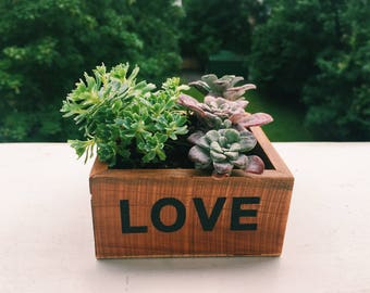 Wooden LOVE Box With Succulents