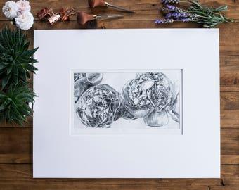 Peonie Etching Print