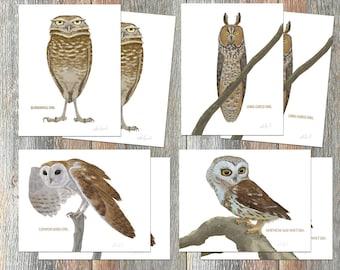 Notecards --Owls