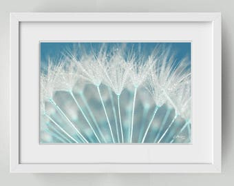 photography seeds of dandelion, wall decor - dandelion macro picture and drops - dandelion, dandelion blue-green decor