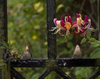 Flowering behind bars