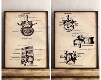 Spine Anatomy Three Vintage Prints - Manual Therapy Guide - Anatomy Illustration - Printable Art - Instant Download