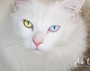 Poster white cat with blue yellow wall eyes 20 x 30 cm
