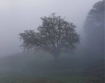 Misty day photograph