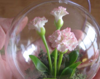 Carnation flower bubble