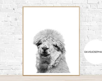 Alpaca Print, Nursery Print, Alpaca Photo, Animal Print, Alpaca Wall Art, Woodlands Nursery, Alpaca Decor, Black and White, Digital Download