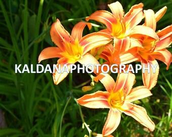 Home Decor Wall Art  Flower Photography
