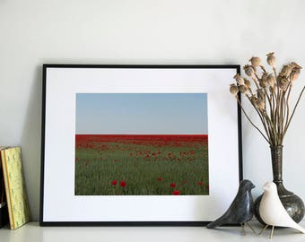Poppy Field, Photographic Print, 5x7, 8x10