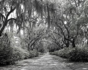 Black & White Photography, Fine Art Photography, Nature Photography, Home Decor, Wall Art, Art Print, Wall Decor, Bonaventure Cemetery