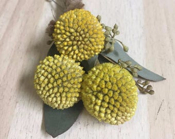 Billy Ball boutonniere, Craspedia Boutineere, DRIED flowers, yellow wedding, Wedding flowers, wedding accessories, handmade, country wedding
