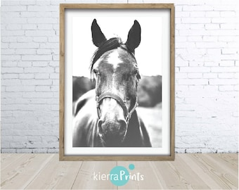 Dark Horse Print, Printable Download, Large Printable Wall Art, Poster, Black and White Photography, Animal, Modern, Home Decor