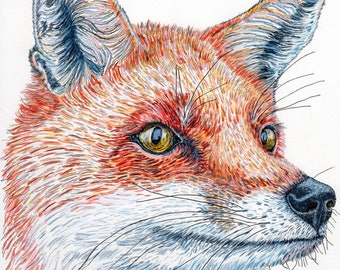 Print of original pen and ink fox portrait ( A4 sized print)
