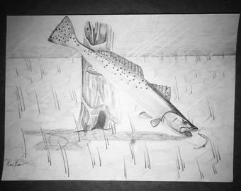 Dinner Time, Trout Art, Sea Trout, Shrimp, Fish Art, Free Shipping