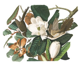 Audubon's Plate 32 Black Billed Cuckoo Cross Stitch Pattern