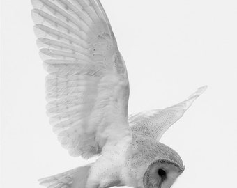 Barn Owl flying blank greeting card notelet thank you note