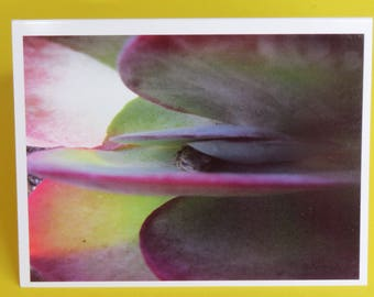 Frog in Plant Nature Photography Card