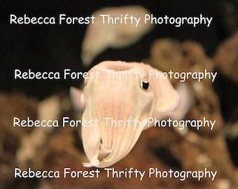 The Cuddlefish