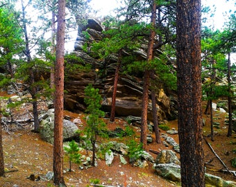 In the woods, nature, trees, woods, rocks