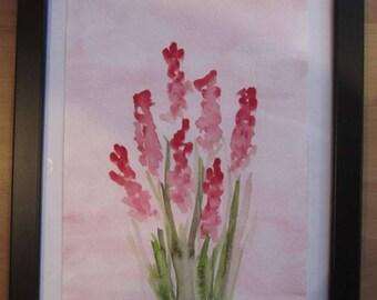Pink Grape hyacinth-pink Grape hyacinth