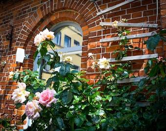 Germany- Roses on Brick