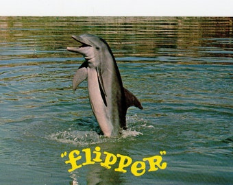 Vintage Flipper the Dolphin Postcard | TV Show, Television, Dolphins, Ocean, Nautical  |  Chrome Photograph Card | Paper Ephemera