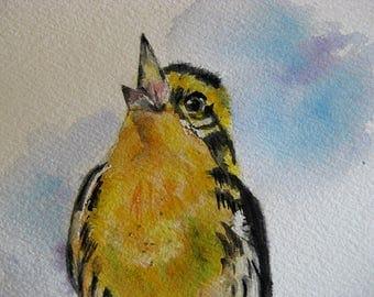 Cute singing warbler Bird art watercolor Original painting