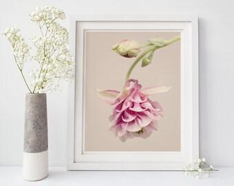 Botanical Print, Flower Wall Art, Bedroom Wall Decor, Floral Art Print, Columbine, Botanical Art, Living Room Decor, Large Wall Art Print