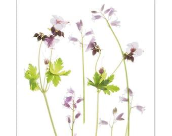 Wildflower Botanical Art Print, Blue Flower Scan, Minimalist Art, X-Ray, Flower Wall Art