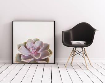 Succulent Art, Botanical Art, Gift for Gardener, Minimal Purple Kitchen Wall Decor - Purple Succulent