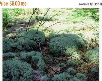 Save25% Reindeer Moss-1 Quart Bag Full-Natural Live Moss-Shade Garden Ground Cover