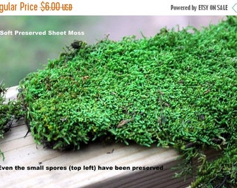Save25% Mood moss-Sheet Moss-PRESERVED Moss Samples-Small snack Bag of Assorted sheet moss and mood moss