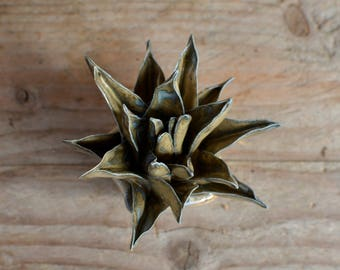 Agave miniature - Home Decor