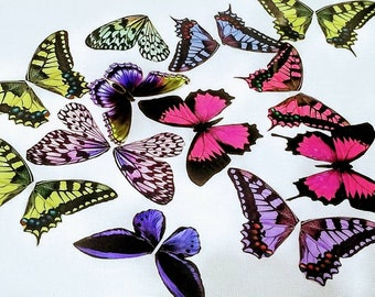 Large Butterfly Wings Transparency Cut Outs - 10 Random