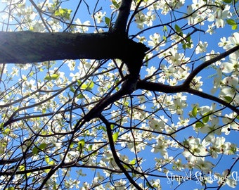 "Instant Download Under the Dogwood Tree 14""x20"" Photograph {#330}"