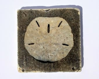Sandollar Stone Photo Coasters - Popular Beach Decor Coasters - Sand Dollar Coasters - Stone Coasters Sand Dollar Photos - Ready to Ship