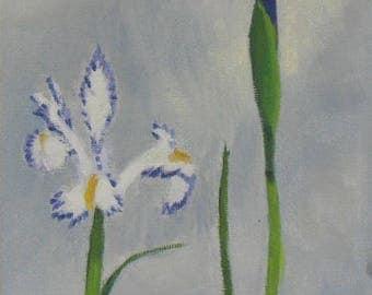 """Garden paintings, spring flowers, flower paintings, iris blooming, 5"""" x 7"""" paintings"""