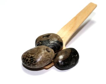 Fossils Beach Stone Drilled Petoskey - River Rock Jewelry Supplies - Crinoid Pebbles Michigan Petosky - Wholesale Jewelry Pendants - Jungle