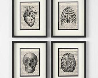 Vintage Medical Anatomy Art   Set Of 4   Heart, Chest, Skull, Brain