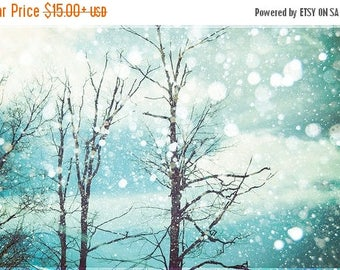 Winter art: Winter Wonderland Fine Art Photography Winter print snow falling bokeh blue sky nature photography Tree wall art  Nature