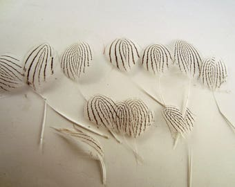 silver feathers pheasant 12 assorted wedding feathers scrapbooking