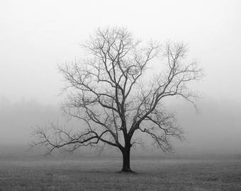 black and white photography, trees, tree, tree photography, lone tree, fog, landscape photography, foggy, Velvet Sunrise